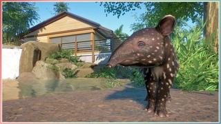 Malayan Tapir Habitat   South East Asia DLC   Planet Zoo Speed Build