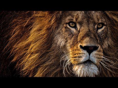 Документальный фильм про львов National Geographic