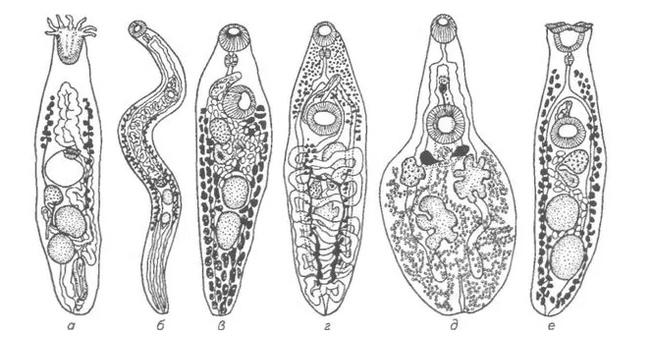 Рибеиря: Паразит, от которого у носителя вырастает много новых конечностей