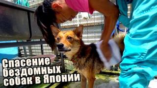 Японки мама и дочка спасают бездомных собак от газовой камеры. Приют для брошеных животных