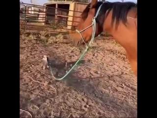 Хочу такое же терпение, как у этой лошадки.
