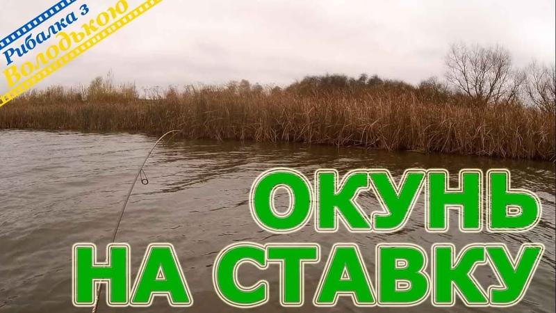 Знайшов активного окуня Риболовля на окуня в листопаді Осіння рибалка на окуня Попав на жор окуня