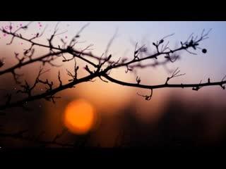 Добрый весенний вечер! Очень нежное пожелание Доброго вечера!.mp4