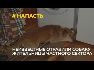 Новая напасть: неизвестные живодеры отравили собаку жительницы дома, возле которого идет стройка