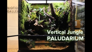 Puddl in the jungle Paludarium '정글 속 웅덩이 팔루다리움' 600*450*600