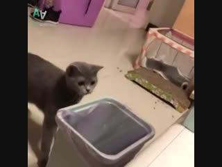 Ох уж эти животные...