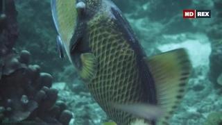 «Дикий мир океана: Таиланд» (Познавательный, природа, животные, путешествие, 2020)