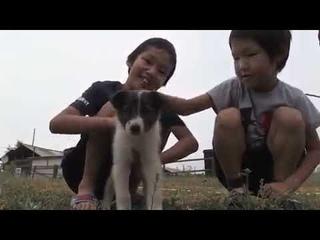 Собака спасла щенка, позвав людей