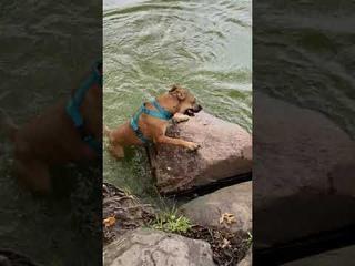 Dog Confuses Floating Stick for Snake    ViralHog