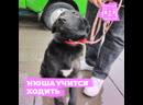 Бездомная собачка Нюша с простреленной лапкой
