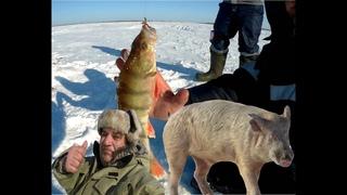 Зимняя рыбалка в феврале озеро Тенис Омская область и дикий Кабан не помеха