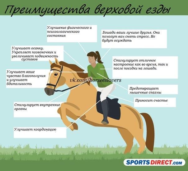 простатит при езде на лошади