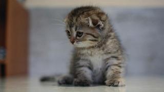 Fluffy Kittens Playtime