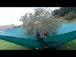 Специальное приспособление для сбора оливок.