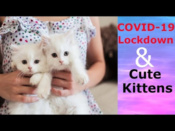 Super cute kittens Episode 14 Cute Kittens Naughty Puppies Playing Despite Of Covid 19