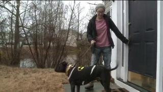 Питбуль герой спас спасает незнакомца пес спасла