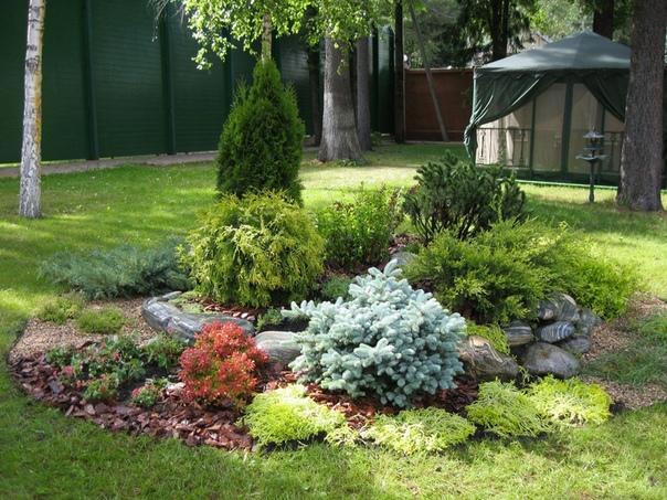 Хвойный сад полезен при заболеваниях легких и сердечно-сосудистой системы