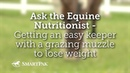 Как снизить вес пасущейся лошади / Getting an easy keeper with a grazing muzzle to lose weight