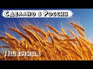 Пшеница в России 2021. Сравнение СССР и России. Сравнение России и Украины. Правда о хлебе в России.