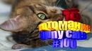 Смешные коты Приколы с котами Видео про котов Котомания 100