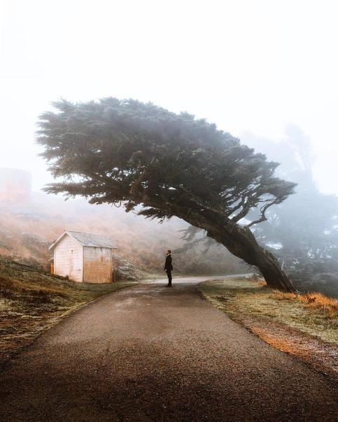 Дерево в Национальном парке Секвойя (Калифорния, США)
