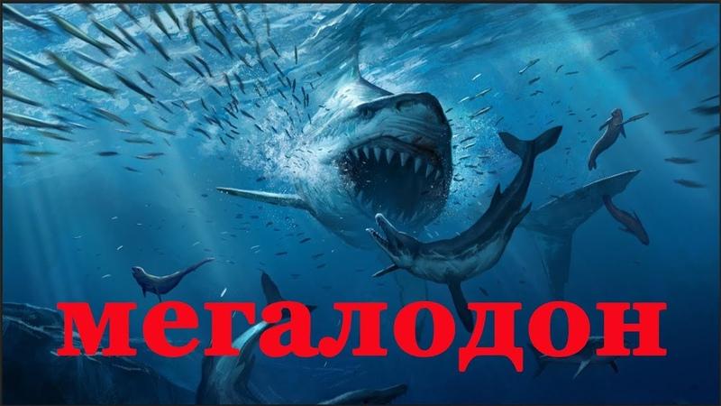 Доисторический Хищник Мегалодон Документальный фильм 2018