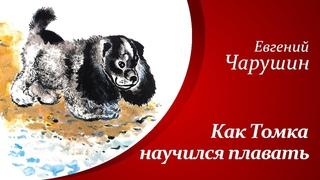 Рассказы о животных для детей     Е.И. Чарушин - Как Томка научился плавать🐶