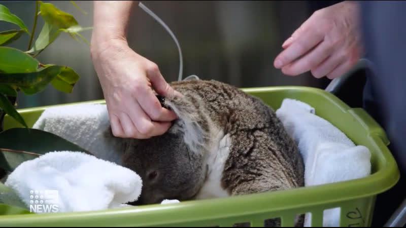 Диких животных Австралии будет спасать реанимобиль