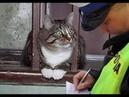 🙀Нарушители спокойствия! 🐈 Подборка смешных котов и котят для хорошего настроения! 😸