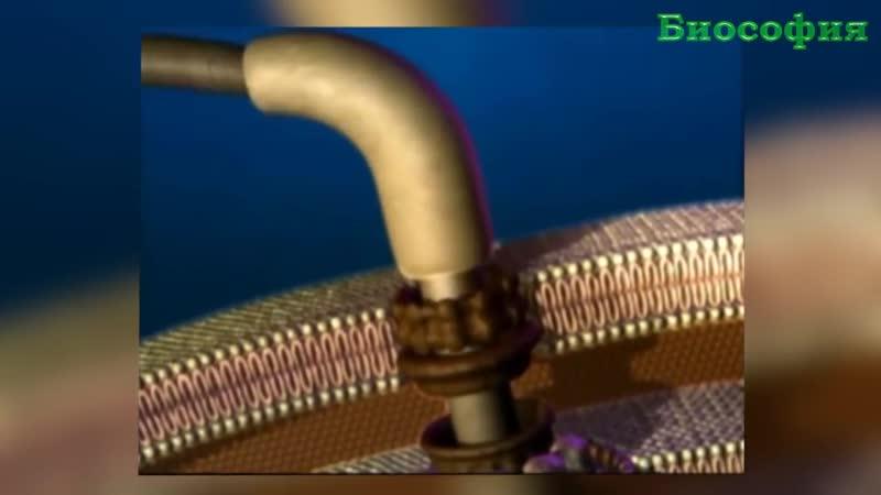 ЖГУТИКОВЫЙ ДВИГАТЕЛЬ БАКТЕРИИ Полный обзор наномотора ТЕХНОЛОГИИ В ПРИРОДЕ