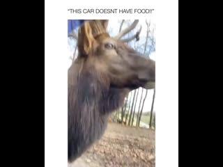 Ему просто сказали, что нет еды 😂