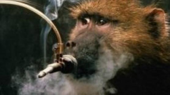 Прежде чем выпустить в продажу новую партию сигарет, производитель должен убедиться в том, что они убивают не слишком быстро Тестируют сигареты на тех, кто не имеет юридических прав и не может