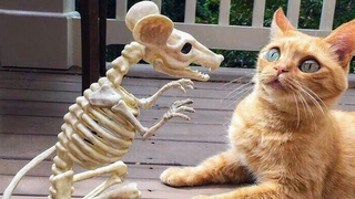 Funny cats and dogs try not to laugh or grin 2021.