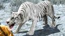 Симулятор Странного Снежного ТИГРА с Кидом 1 Баги в Arctic Tiger Simulator на ПУРУМЧАТА