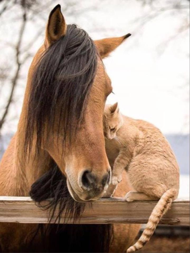 Неожиданная любовь кошек и лошадей!)