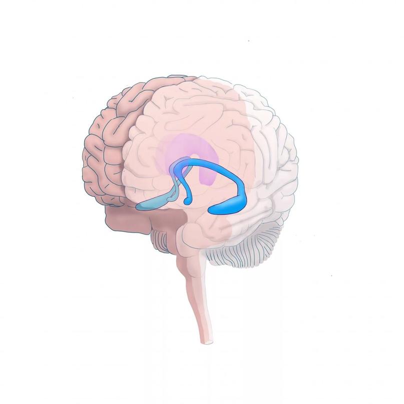 Сколько информации может вместить наш мозг, изображение №2