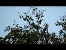 Оптический зум Nikon P600 x60