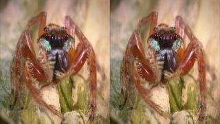 VR 3D фильмы - Маленькие монстры: Спрятаться и обмануть в 3Д - Little Monsters: Hide & Cheat 3D
