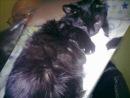 О моей кошке Даши,которой сегодня не стало..........