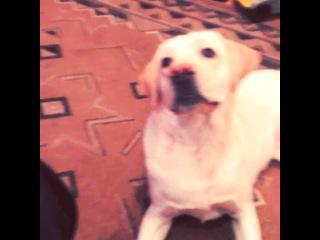 Mein kleiner Hund