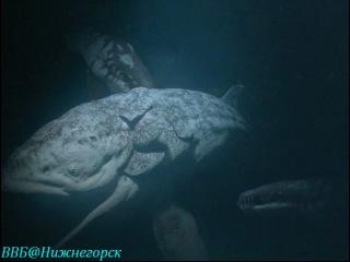 BBC Прогулки с морскими чудовищами 3 серия Документальный 2003