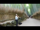 Бамбуковая роща Арасияма Киото 2