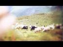 2-е место. Харуки Мураками. Охота на овец