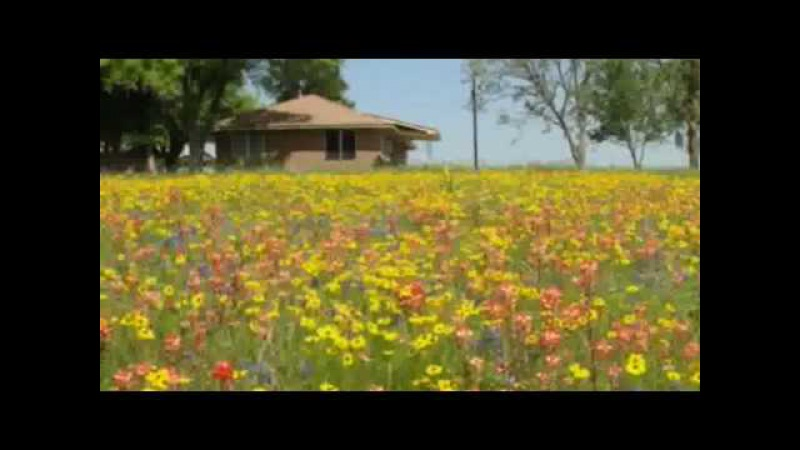 Texas Wildflowers Toselli's Serenade Andre Rieu