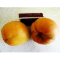 Саженцы абрикоса Сатисфекшн