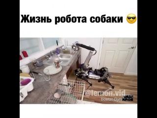 Instagram video by Топовое видео, юмор, шок  Dec 14, 2016 at 6:06pm UTC