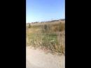 JAVA Alpfa Viper