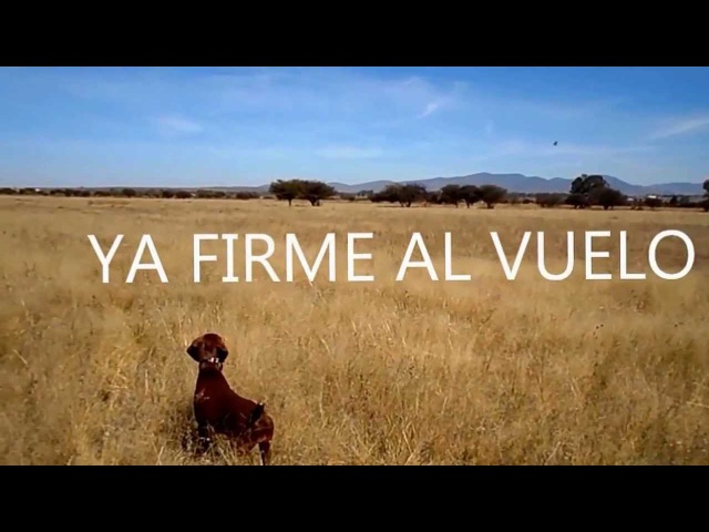 Trained in Mexico by RAMON FOYO Retriever Dog School