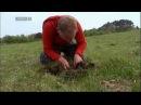 Naturhistorisk Museum - Bidt af Naturen, DR1. Morten DD finder humlerovbille (Emus hirtus) på Samsø.