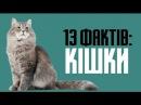 13 фактів про котів та цікаві особливості кішок